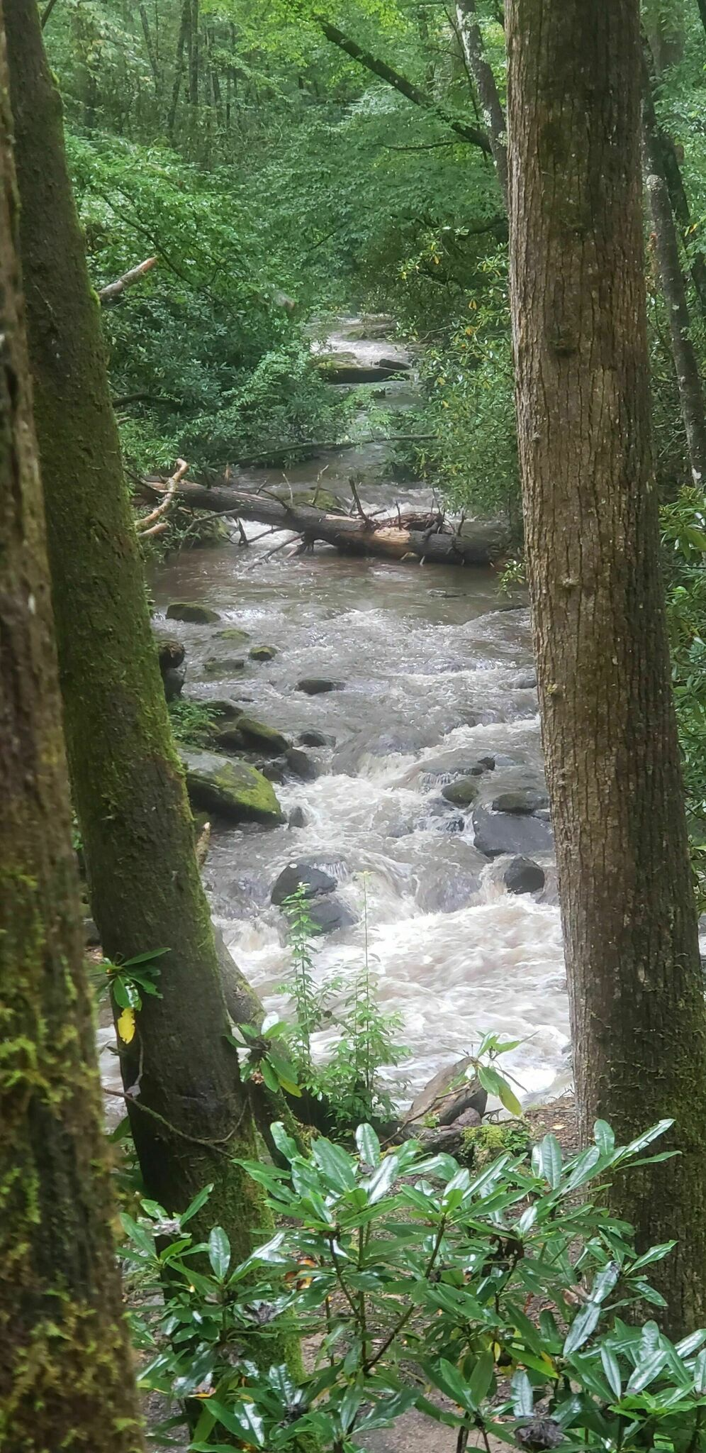 Pisgah National Forest Trail Map - Maps For You |Pisgah National Forest Map